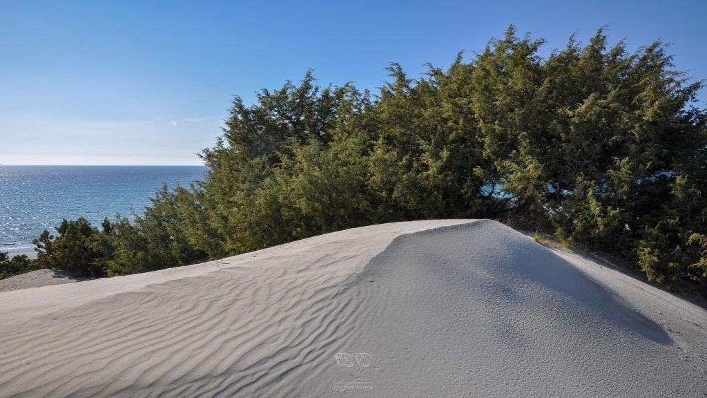PortoPino _ Dune 2