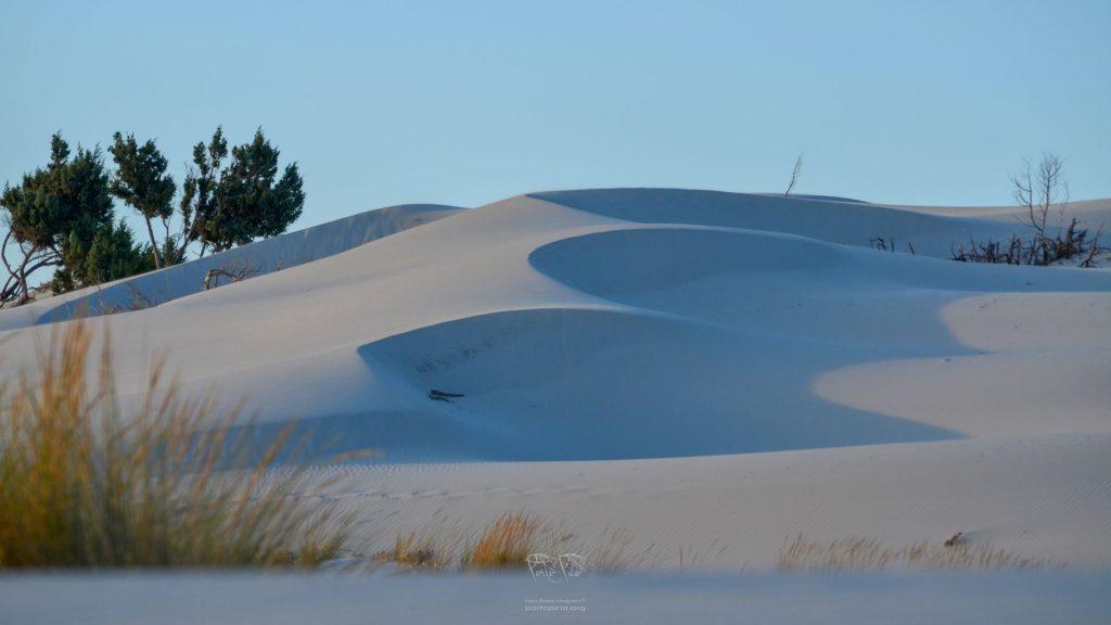 PortoPino _ Dune 1